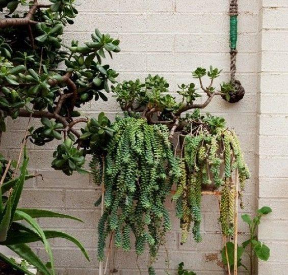 Díselo con una planta