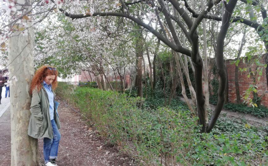 «La Quinta de los Molinos» llena de almendros en flor