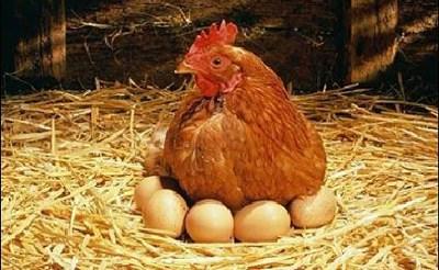 En cuestión de huevos,…el tamaño no importa